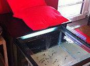 Fish Pedicure ....