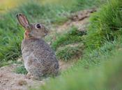 Super défi Semaine affût est-il obligatoire pour photographier lapins garenne
