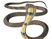 cobras retrouvés sous sièges d'un train Vietnam