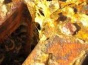VIEILLISSEMENT CUTANÉ: L'extrait feuille peuplier, antioxydant naturel Journal Agricultural Food Chemistry