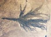 Botswana delta l'Okavango crue
