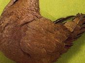 Principales causes mortalité pigeonneau nid.