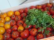 Coulis tomates basilic