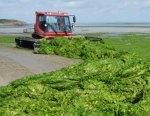Nathalie Kosciusko-Morizet ordonne fermeture cinquante plages bretonnes