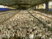 manger préserve l'efficacité antibiotiques