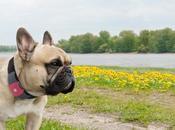 Qualcomm traque votre chien avec Tagg