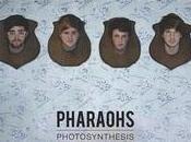 Chronique Pharaohs Photosynthesis