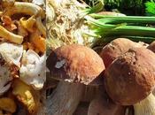 Tourte champignons bois
