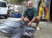 Formation plongée sous-marine Marseille... avec tortues