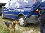 [Protection animale] Chastre: près chiens chiots saisis dans état négligence épouvantable chez Comtesse Monceau Bergendael