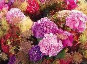 conseils pour conserver Hyfrangéas Hortensias vase