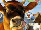 CASTING chez Vache