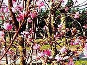Ethymologie: printemps.
