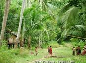 Biodiversité pourquoi faut protéger forêts tropicales indonésiennes
