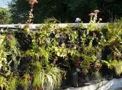 Notre végétal filtrant mois après taille complément plantation