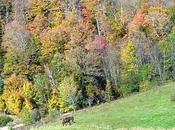 Stowe (Vermont)