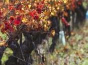 Escapade d'automne dans Vallée Rhône