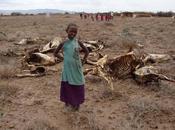 Afrique plutôt mourir faim nourrir d'OGM