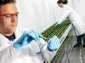OGM: L'Europe résiste patate allemande Sécurité alimentaire
