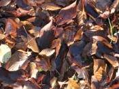 brûle feuilles mortes, ramasse bichonne