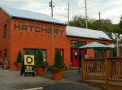 White Duck Taco Shop Restaurant