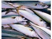 OMEGA Manger poisson protège aussi cœur jeunes femmes Hypertension
