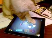 chat train jouer Fruit Ninja iPad