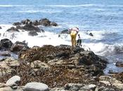 L´huiro, l'or brun pêcheurs chiliens