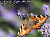 Parole Papillons Petite tortue Machaon