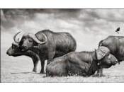 Voyage Afrique avec photographe Nick Brandt