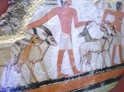Salle vitrine peintures mastaba metchetchi raison présence l'oryx dans l'iconologie l'offrande alimentaire