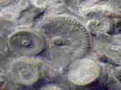 mécanisme millions d'années