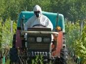 Agriculture l'usage pesticides n'est indispensable