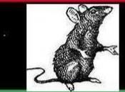 Libye renégats, dans leurs basses oeuvres attaquent l'ONU Benghazi