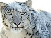 Apple offre Snow Leopard