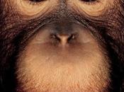 Portraits primates