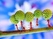 monde fourmis était inspiration vie....