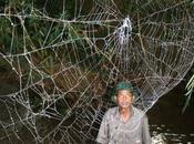 secret toiles d'araignée