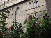 Altérarosa Avignon
