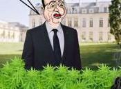 Cannabis légalisation ratée...