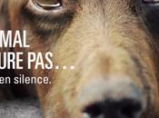 Lutter contre l'abandon animaux avec millions d'amis