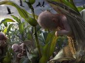 OGM… Riz… Gènes humains