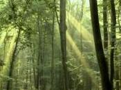 Emploi carbone, bénéfices forêts françaises