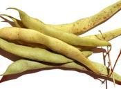 Haricots tarbais frais cassoulet