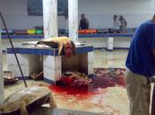 Massacre quotidien tortue marine Tunisie