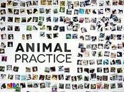 Critiques Séries Animal Practice. Saison Pilot.
