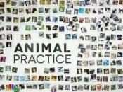 Pilote: Animal Practice
