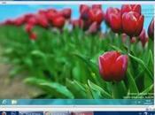 Comment installer Tester Windows sous VitualBox?