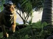 Rook Islands montre vidéo