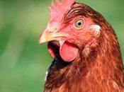 poulet facettes cachées cost